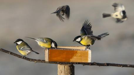 Learn fun facts about songbirds found on Long