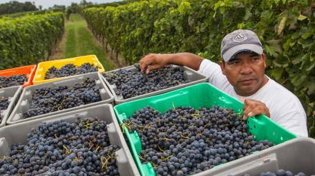 Meet three local winemakers during a moderated talk.