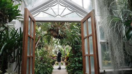 Inside a greenhouse at the Planting Fields Arboretum