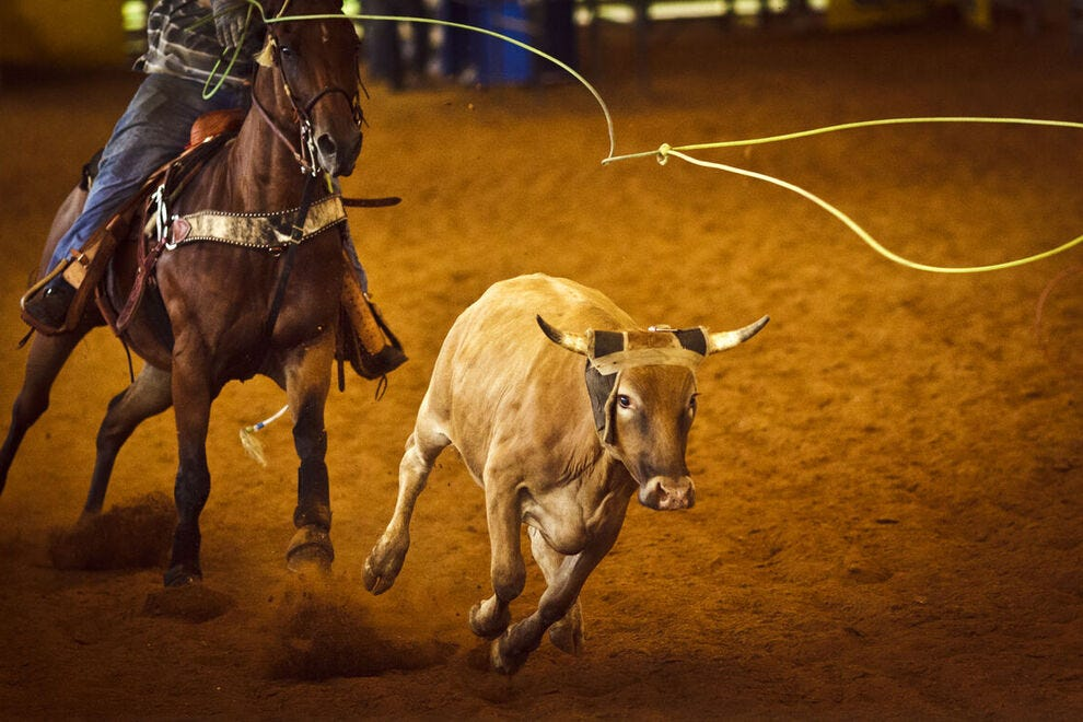 Vote for your favorite rodeo